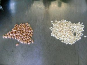 Dried corn and dried beans are used to make the traditional samp & beans combo - it keeps you full for many hours!