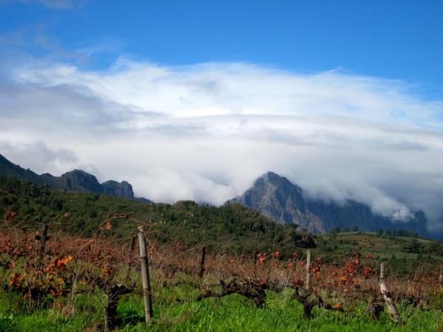 druk my niet mountain shot with vines